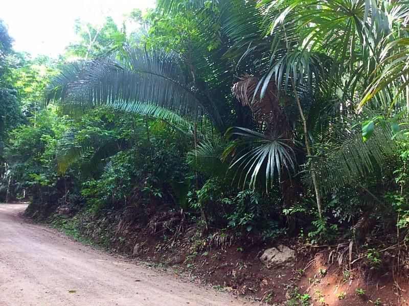 Better In Belize Lot