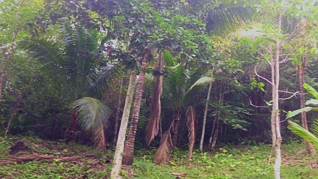 Lot 96 at Better In Belize Eco Village