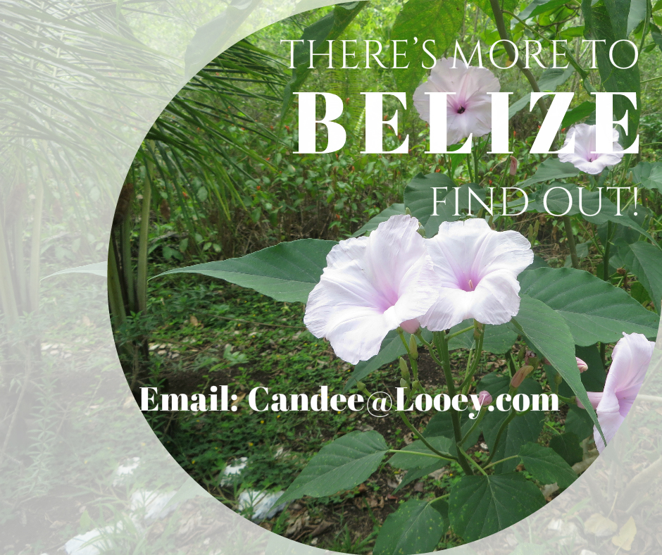 Find out more about Belize