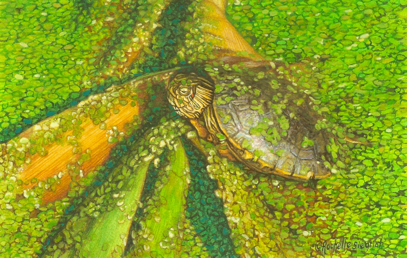 Turtle panting by Rachelle Siegrist
