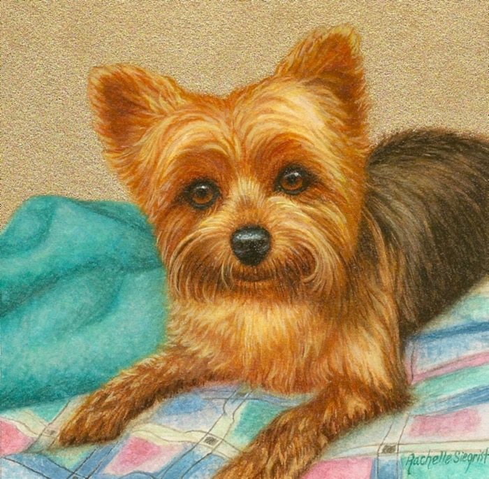 Painting of a Yorkie by Rachelle Siegrist