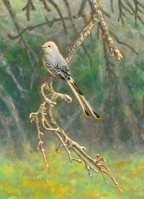 Scissor-tailed flycatcher painting by Wes Siegrist
