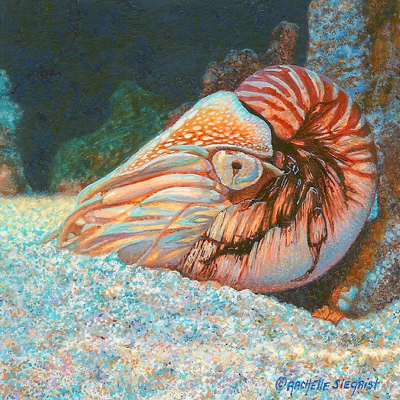 Nautilus painting by Rachelle Siegrist