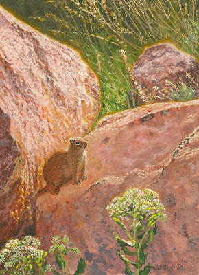 Wyoming Ground Squirrel by Wes Siegrist