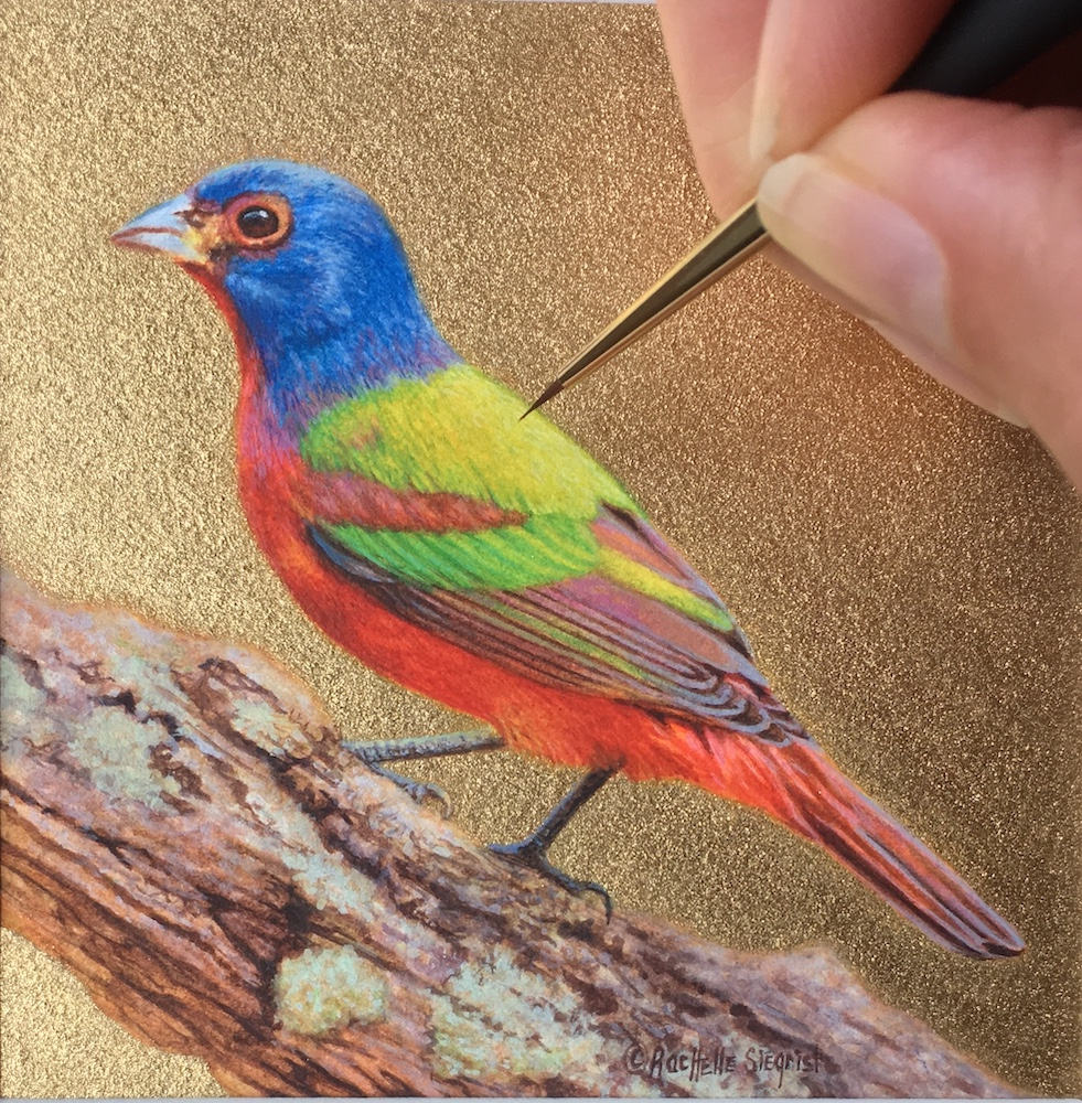 Painted Bunting painting by Rachelle Siegrist
