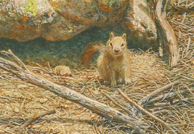 Golden-mantled Ground Squirrel by Wes Siegrist