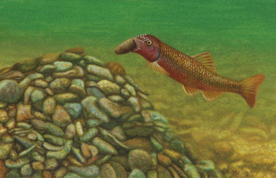 The Fish That Carries Rocks by Rachelle Siegrist