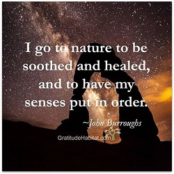 I go to nature to be soothed and healed, and to have my senses put in order