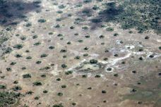 Termite mounds in Mozambique
