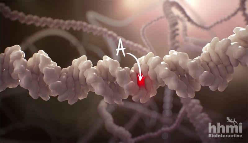 HHMI BioInteractive CRISPR image