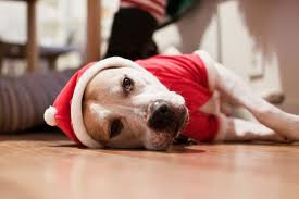 IMAGE: Sad Santa Dog.