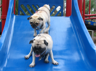 IMAGE: Dogs on sliding board