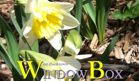 West Bucktown WindowBox