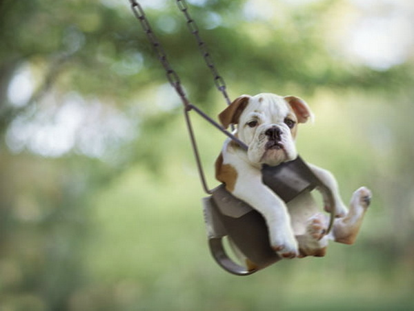 IMAGE: Dog In Swing