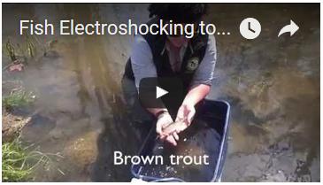 Electroshocking video