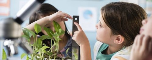 STEM Teaching Tools #60 Header Image. Two students measure a plant height.