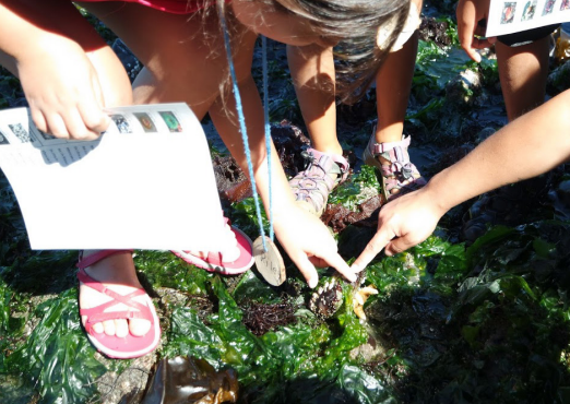 Students explore a tidal area. Two point at something in the kelp.