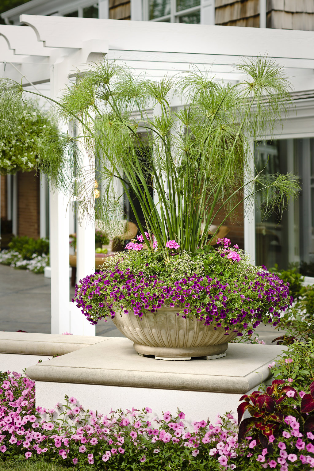 Graceful Grasses® King Tut™ Combo, Photo courtesy Proven Winners, www.provenwinners.com