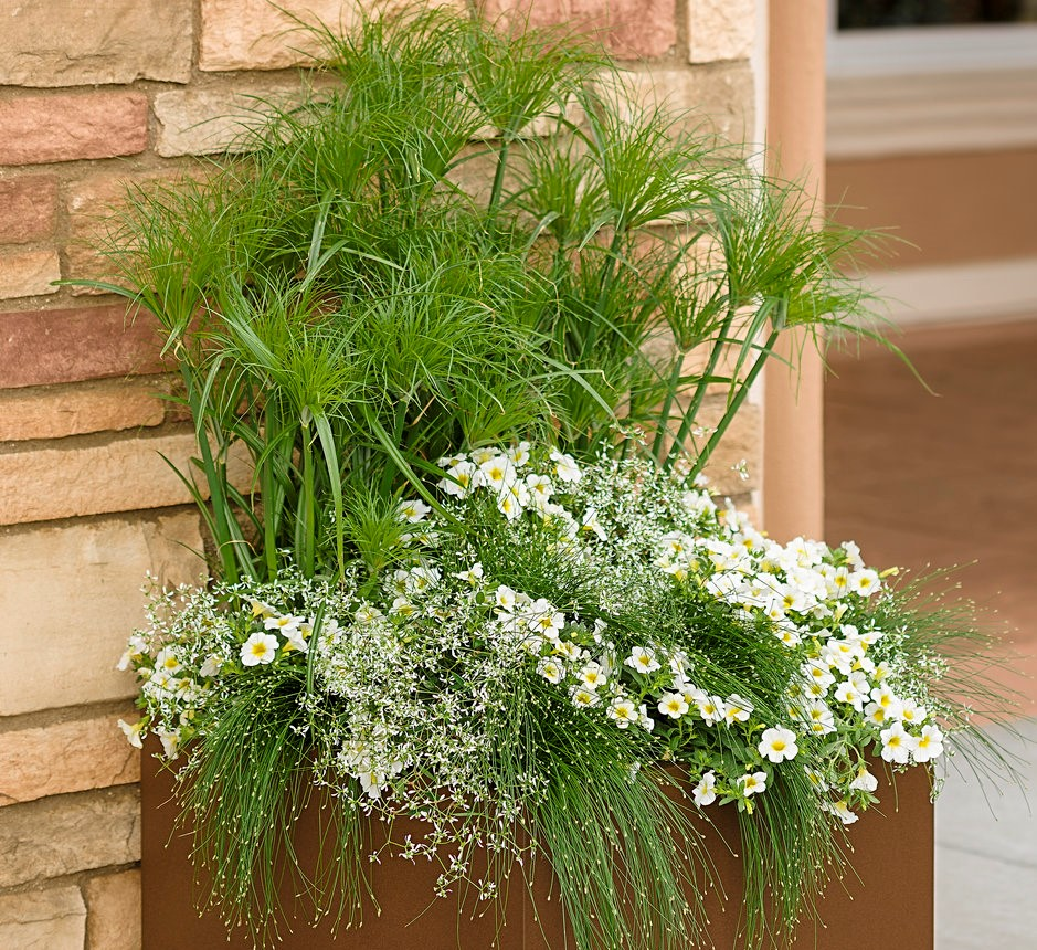 Proven Winners Mixed Container Planting