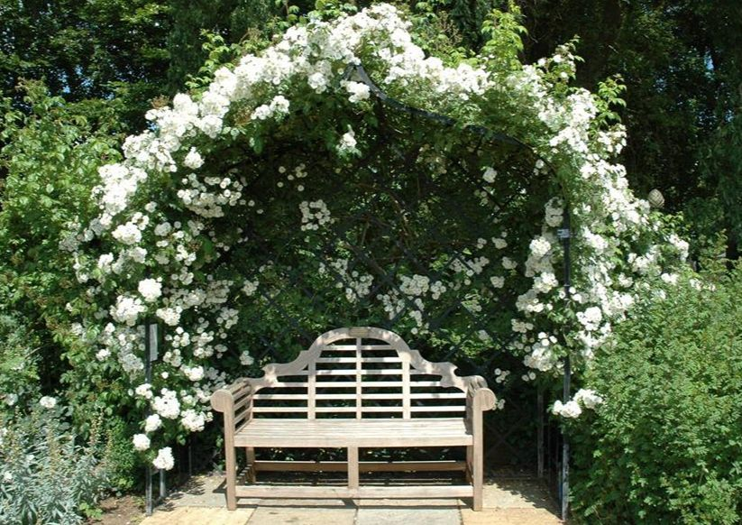 Bench under arbor with roses