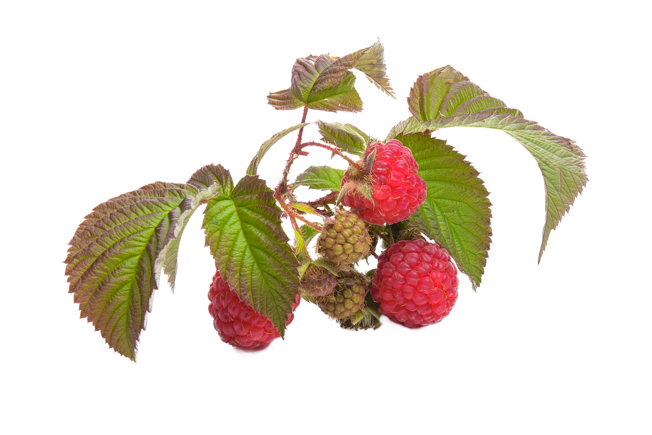 Raspberries for Summer Health