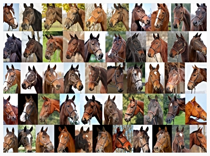The faces of the lucky 51 horses