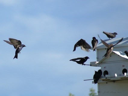 © J.M. Kosciw, CT, Hammonasset Beach State Park, Madison, August 2011
