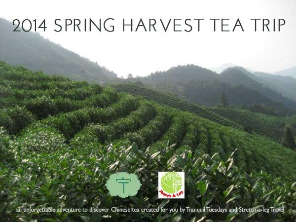 2014 Spring Harvest Tea Trip
