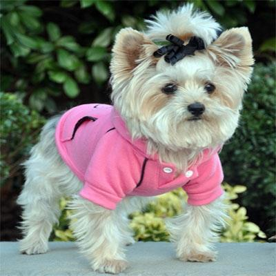 Casual Raspberry Sorbet Sports Dog Sweatshirt with Hoodie at Pet Stop Store