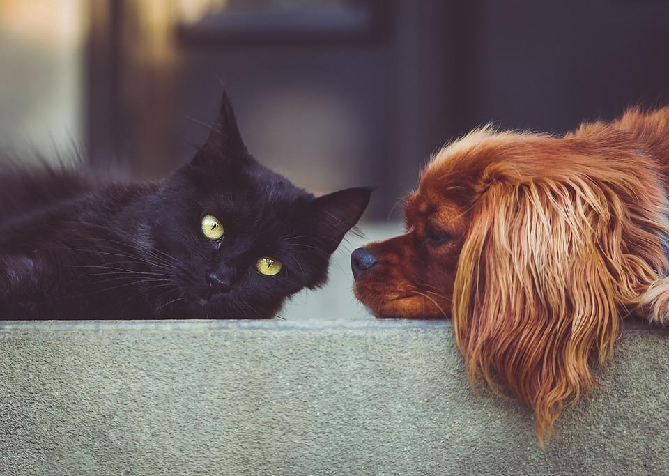 Pet Stop Store's Adopt a Pet FUREND Quarterly Scholarship Giveaway
