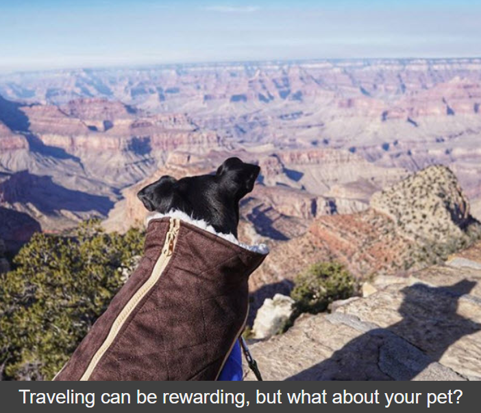 Traveling with Your Pet - Pet Stop Store Edition