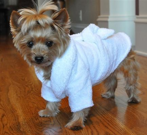 Cute White Gold Terry Cloth Bathrobe for Dogs