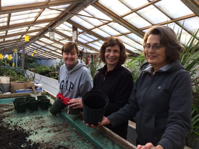 Upper Volunteer Greenhouse