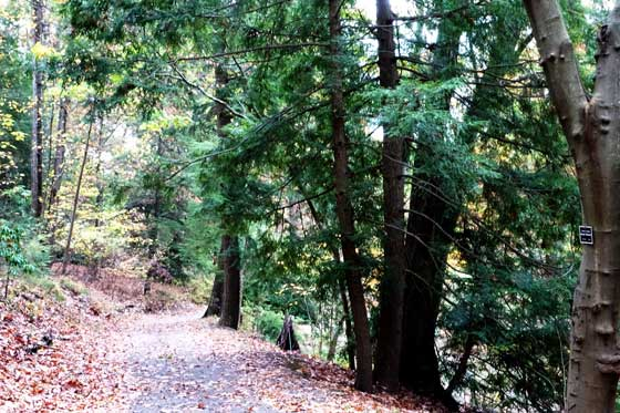 November in arboretum