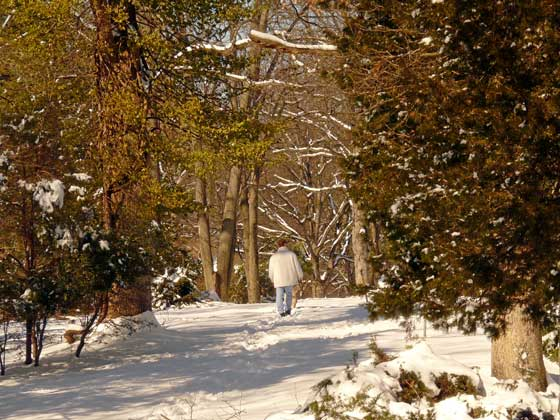 Winter in arboretum