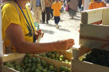 Bénévole SPF et prunes