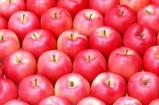 photo pommes