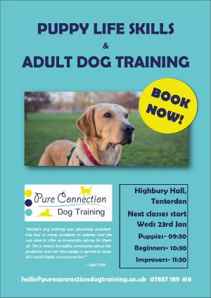 Puppy Life Skills and Adult Dog Training in Tenterden