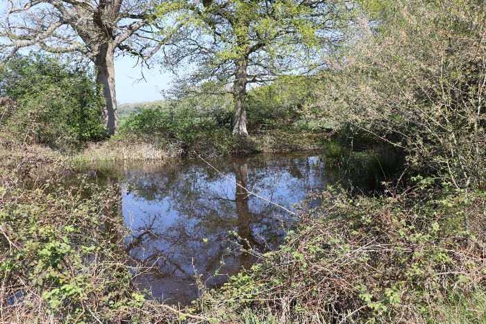 Kentish Stour Countryside Partnership looking for ponds