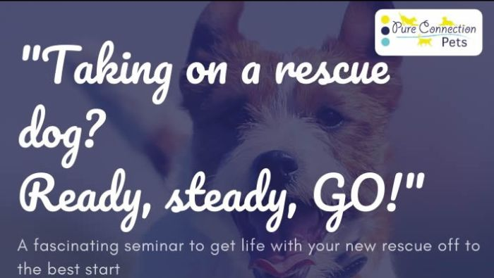 LECTURE Taking on a Rescue Dog, Ready Steady GO
