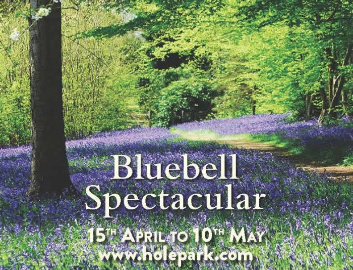 Bluebell Spectacular at Hole Park Gardens in Rolvenden