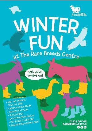 Winter Fun at the Rare Breeds Centre