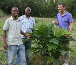 Josh Schneider with one year breadfruit tree