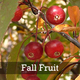 Show Time™ Crabapple Fall Fruit