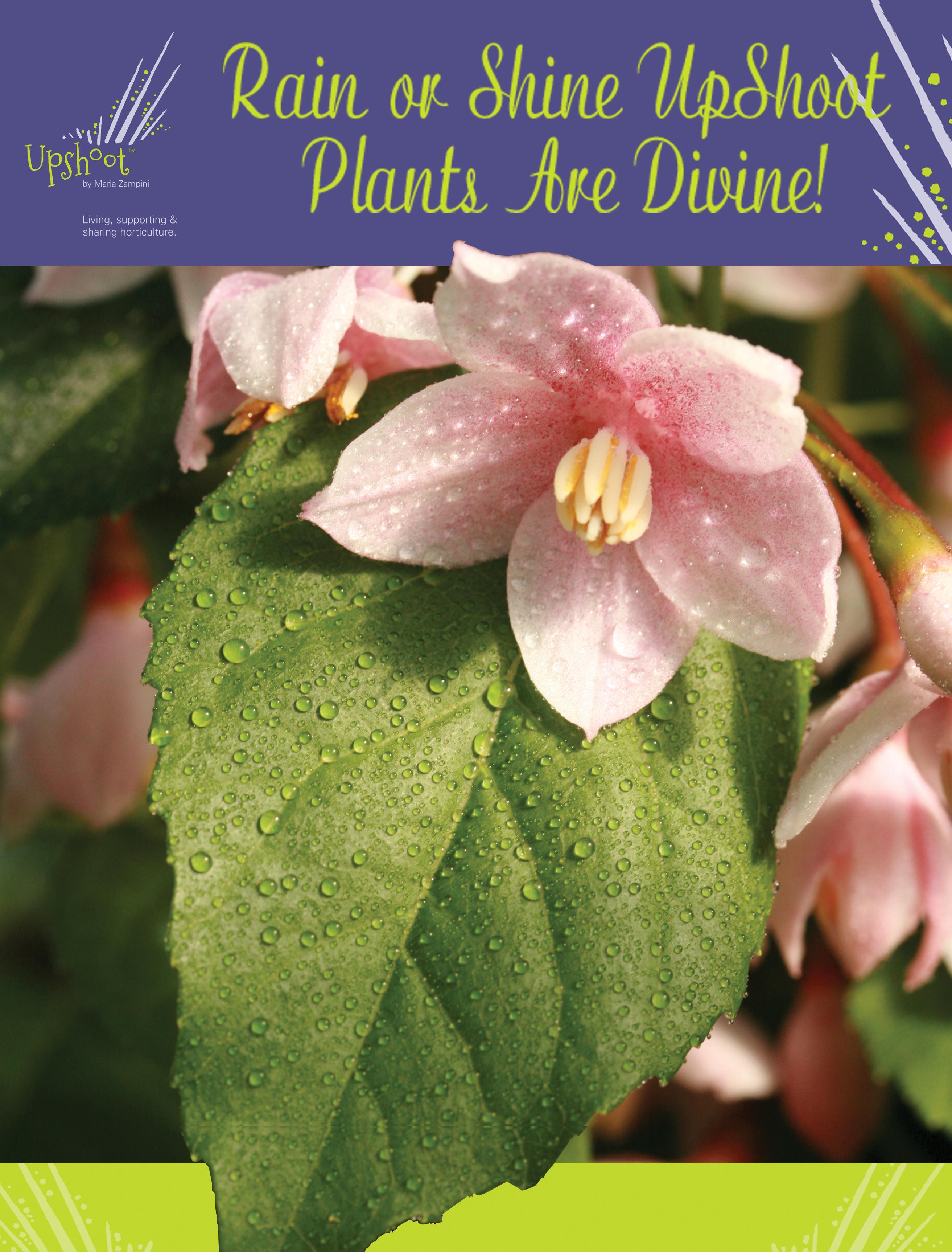 Rain or Shine UpShoot Plants Are Divine