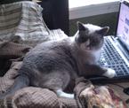 Van the Typing Cat!