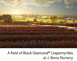 J. Berry Nursery