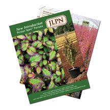 Parrotia Persian Spire Sales Flyer