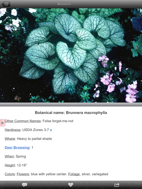 Brunnera macrophylla plant page example