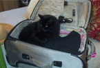 Maria's cat Sadie is ready to travel at a moment's notice!